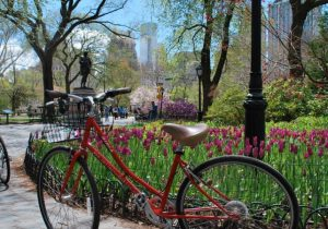 Central-Park-Sightseeing-Bike-Rental