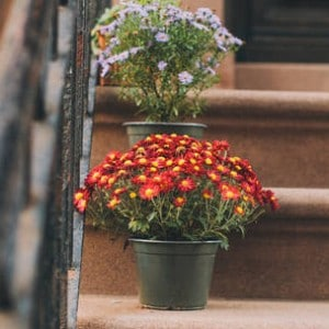 0_4200_84_2716_two_nyc-stoops-flower-pots-jr034