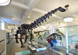 sauropod-web-2