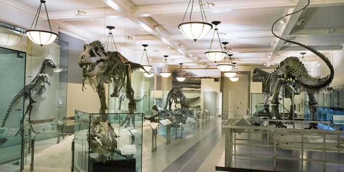 hall-of-saurischian-dinosaurs_dynamic_lead_slide