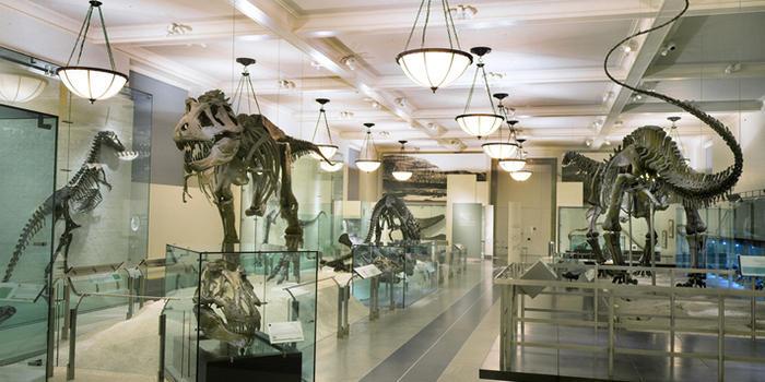 hall-of-saurischian-dinosaurs_dynamic_lead_slide