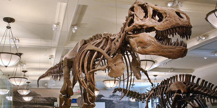 tyrannosaurus-rex_dynamic_lead_slide
